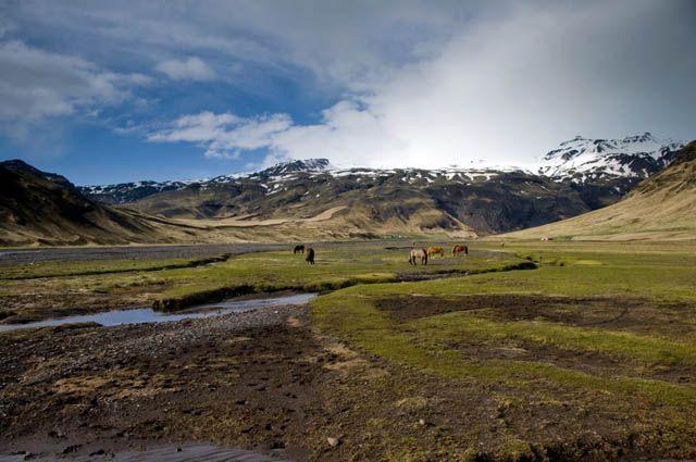 Zdjęcia: Okolice Skogar, Koniki na pastwisku:), ISLANDIA
