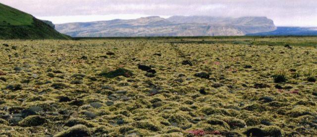 Zdjęcia: okolice Skaftafell, droga jednorazowego uzytku, ISLANDIA