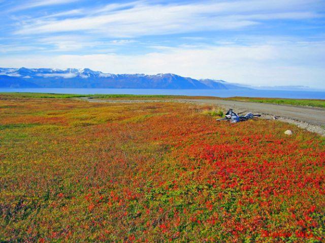 Zdj�cia: Husavik, Polnocna Islandia, Pola jagodowe, ISLANDIA