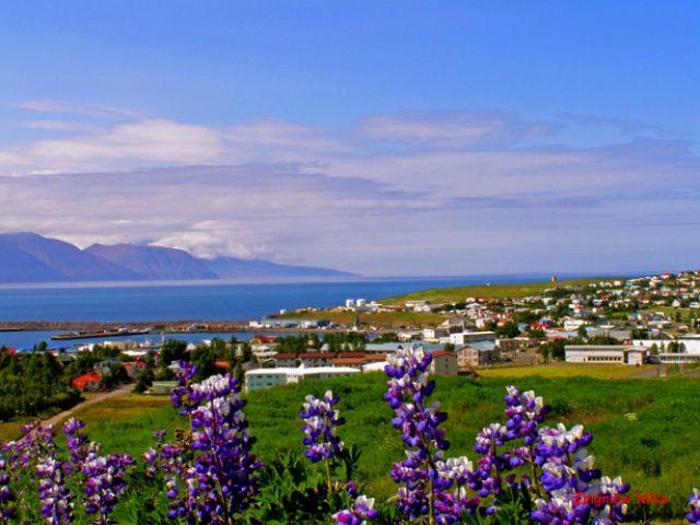 Zdjęcia: Husavik, Polnocna Islandia, Lubin, ISLANDIA