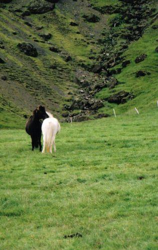 Zdjęcia: południe, czarno-biali, ISLANDIA