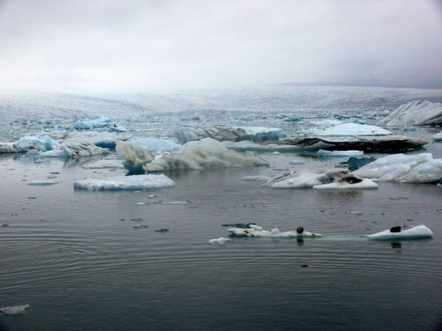 Zdj�cia: Jokulsarlon - Lodowa laguna, Po�udniowa Islandia, Lodowa laguna we mgle, ISLANDIA