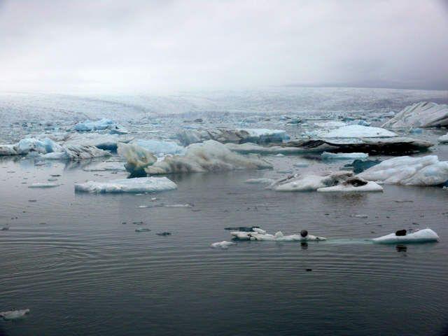 Zdjęcia: Jokulsarlon - Lodowa laguna, Południowa Islandia, Lodowa laguna we mgle, ISLANDIA