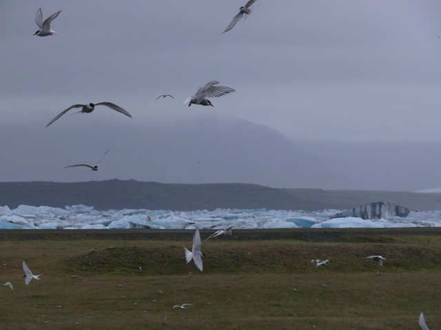 Zdjęcia: Jokulsarlon - Lodowa Laguna, Południowa Islandia, Okolice Jokulsarlon , ISLANDIA