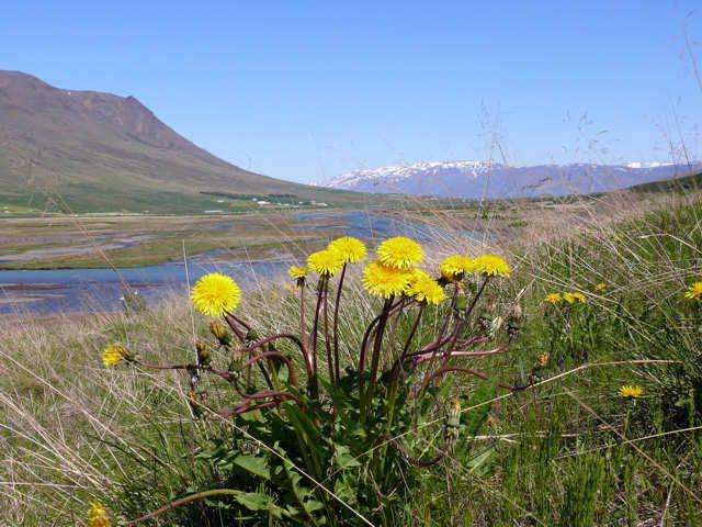 Zdjęcia: Okolice Akureyri, Północna Islandia, Dolina Óxnadalur , ISLANDIA