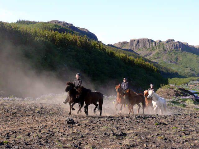 Zdjęcia:  okolice Stóng, Południowa Islandia, Pędzenie koni, ISLANDIA