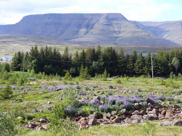 Zdjęcia: Okolice Laxsnes, Południowa Zachodnia Islandia, Okolice Laxsnes, ISLANDIA