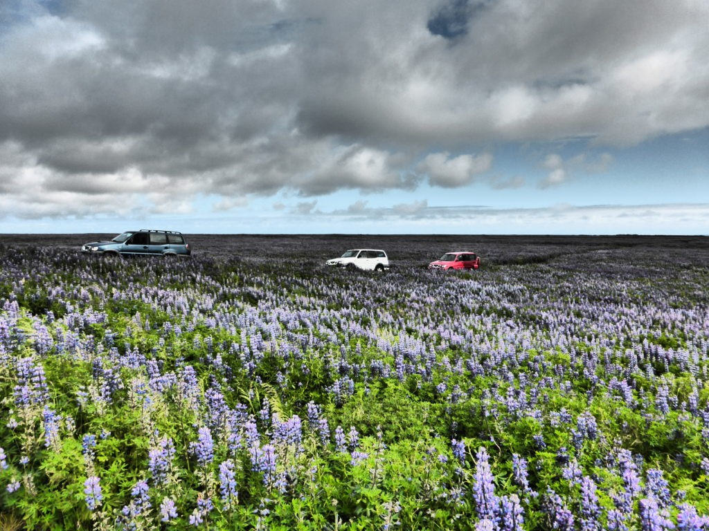Zdjęcia: Islandia, Islandia, Niespotykane jak na islandzki krajobraz kwiatki ;), ISLANDIA