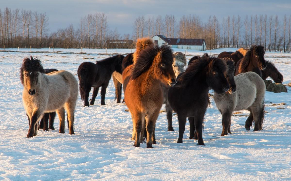 Zdjęcia: Islandia południowa, Islandia południowa, zimowa Islandia, ISLANDIA