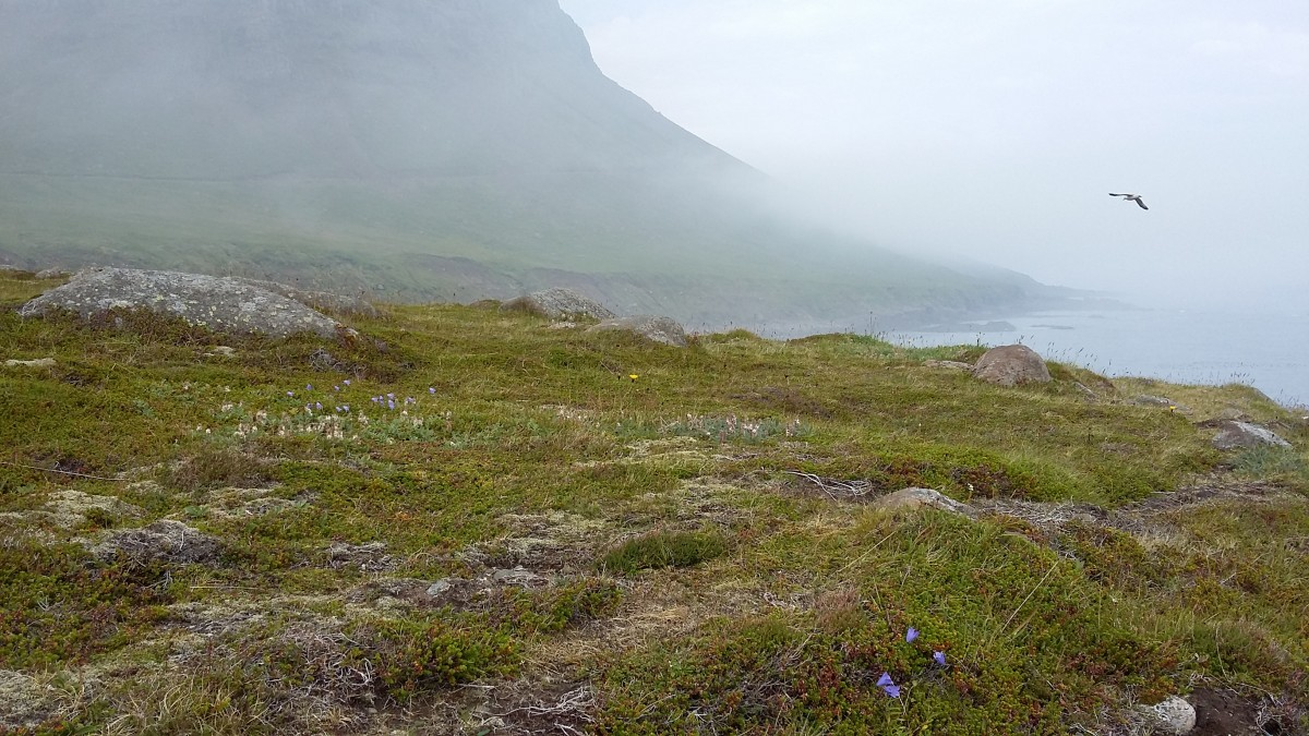 Zdjęcia: Dalatanga, Mjóifjörður, Dalatanga, ISLANDIA