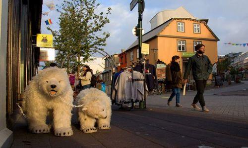 ISLANDIA / - / Reykjavik / Niedźwiedzie polarne ;)