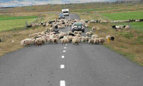 Zdjecie ISLANDIA / wschodnia islandia / reydarfjordur / na drodze