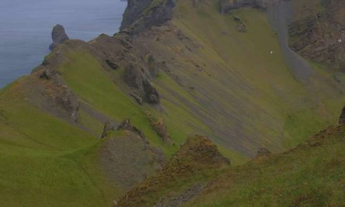 Zdjecie ISLANDIA / Wyspy Westmanów / Wyspa Heimaey / Spacer pośród zieleni