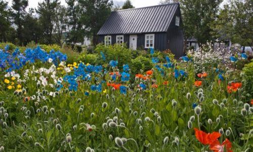 Zdjecie ISLANDIA / - / Akureyri / Niebieskie maki