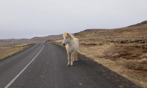 Zdjecie ISLANDIA / Islandia / Islandia / you shall not p