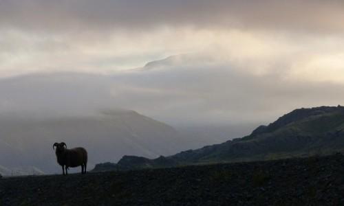Zdjęcie ISLANDIA / Hoffellsjökull / Hoffell  / Islandzkie klimaty