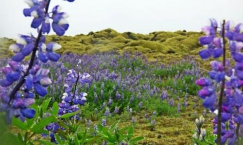 Zdjecie ISLANDIA / Islandia południowa / Islandia południowa / Islandia - kraina tysiąca planet