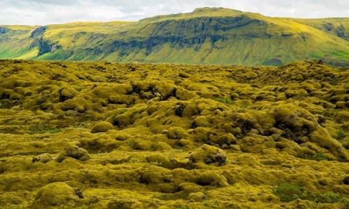 Zdjecie ISLANDIA / Poludnie wyspy / Okolice Reykjaviku / Krajobraz