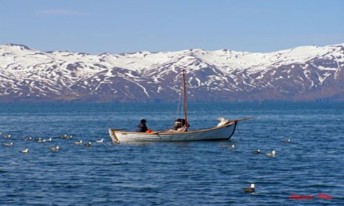Zdjecie ISLANDIA / Polnocna Islandia / Husavik / Husavik