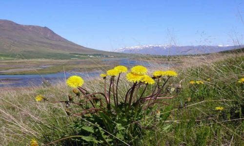 Zdjęcie ISLANDIA / Północna Islandia / Okolice Akureyri / Dolina Óxnadalur