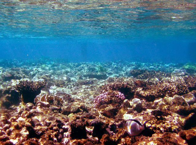 Zdjęcia: Dystrykt Poludniowy /  Eilat, rafa koralowa, IZRAEL