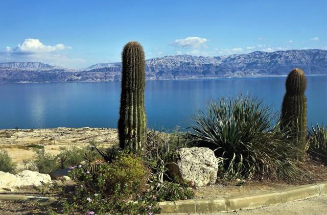 Zdjęcia: Ein Gedi, ., Morze Martwe, IZRAEL