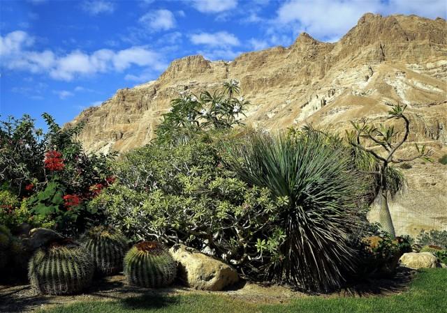 Zdjęcia: Ein Gedi, Morze Martwe, Ogród na pustyni, IZRAEL