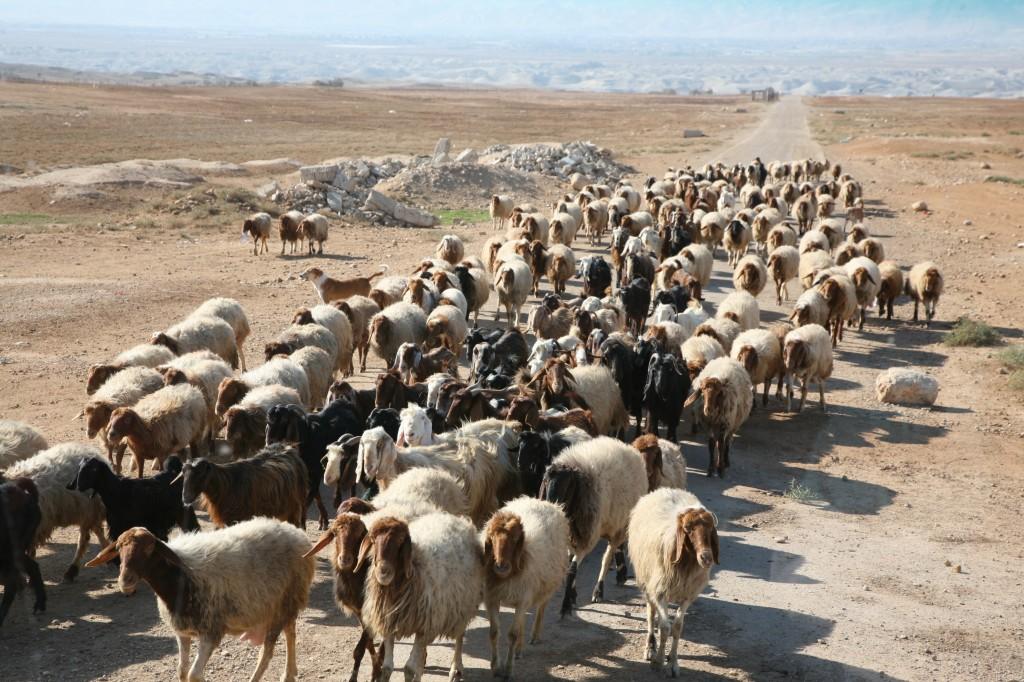 Zdjęcia: droga z Nazaretu do Betlejem, Palestyna, W drodze do Betlejem, IZRAEL