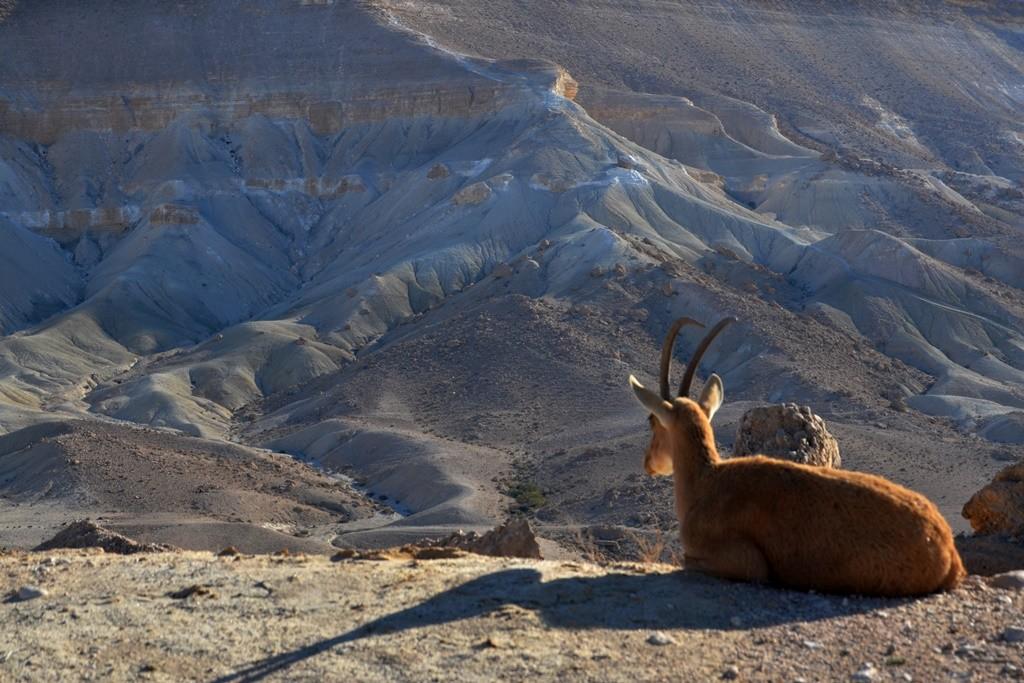 Zdjęcia: Avdat Canyon, Pustynia Negew, zapatrzenie..., IZRAEL