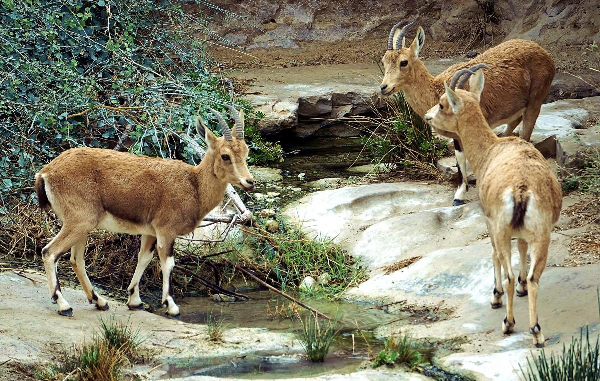 Zdjęcia: Park Narodowy Avdat, Pustynia Negew, Narada, IZRAEL