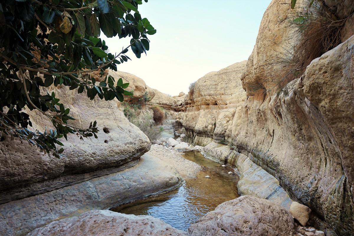 Zdjęcia: Ein Gedi, Morze Martwe, Wadi Arugot, IZRAEL