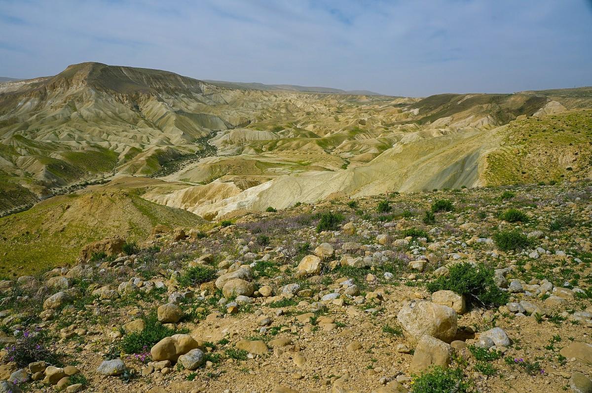 Zdjęcia: Park Narodowy Avdat, Pustynia Negew, Wiosna, IZRAEL