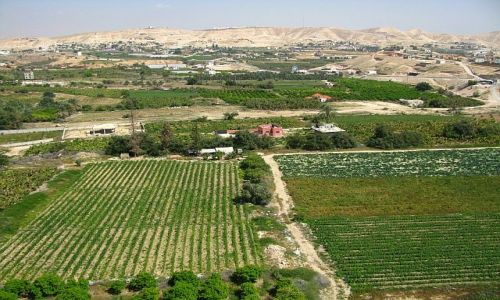 IZRAEL / Zachodni Brzeg / Jerycho / pola uprawne