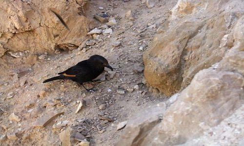 Zdjęcie IZRAEL / Morze Martwe / Masada / ptaszek