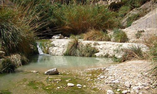 Zdjęcie IZRAEL / Morze Martwe / Ein Gedi / Park Narodowy Ein Gedi