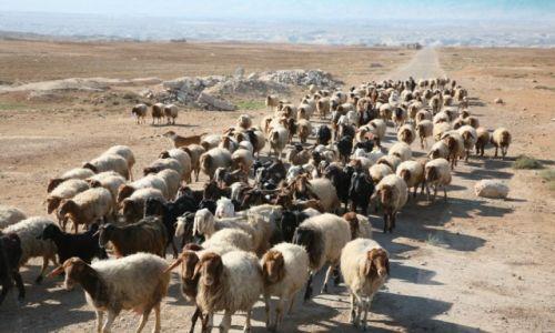 Zdjęcie IZRAEL / Palestyna / droga z Nazaretu do Betlejem / W drodze do Betlejem