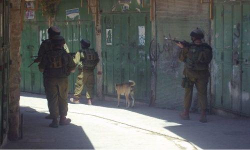 Zdjęcie IZRAEL / Palestyna / Izraelscy żołnierze w Hebronie / Okupacja
