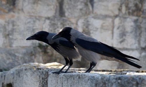 Zdjęcie IZRAEL / - / Jerozolima / strażnicy