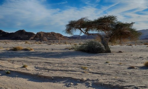Zdjecie IZRAEL / Pustynia Negew / Timna Park / nieco cienia