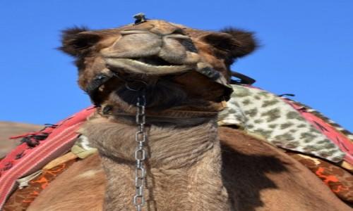 Zdjecie IZRAEL / Dystrykt Południowy / Eilat / nie kot, nie koza, słoń też nie ;)