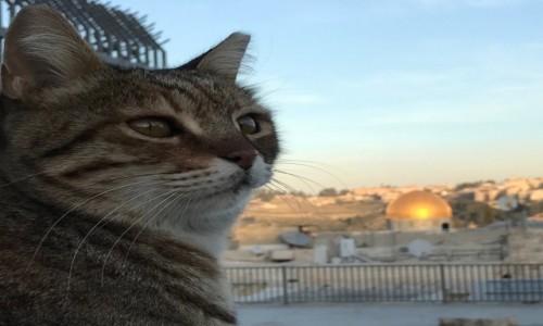 Zdjęcie IZRAEL / Jerozolima / Jerozolima / kicia