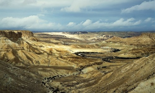 Zdjęcie IZRAEL / Pustynia Negew / Park Narodowy Avdat / Barwy pustyni