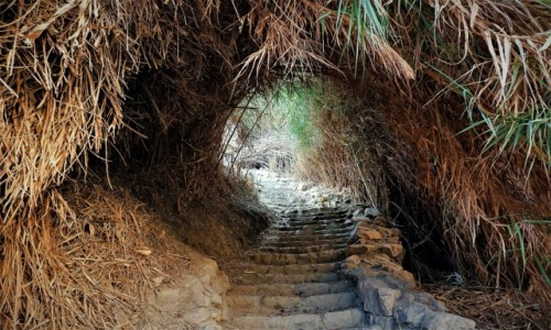 IZRAEL / Morze Martwe / Ein Gedi / Tunel wśród trzcin