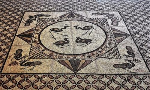 IZRAEL / Morze Martwe / Ein Gedi / Mozaiki ze starej synagogi