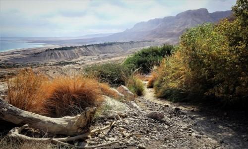Zdjęcie IZRAEL / Morze Martwe / Ein Gedi / Na szlaku