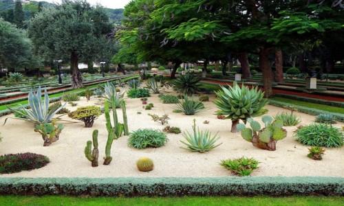 Zdjęcie IZRAEL / Haifa / Ogrody Bahai / Kaktusowe poletko