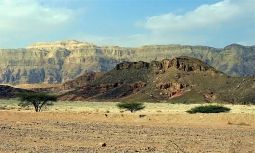 Zdjęcie IZRAEL / Eilat / Timna Park / Krzaczki