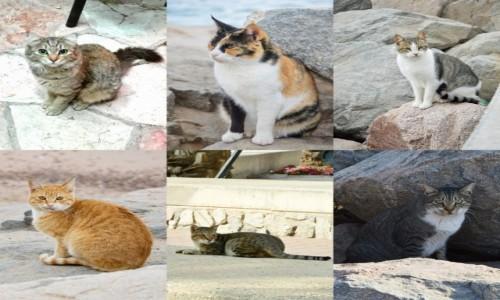 Zdjecie IZRAEL / Dystrykt Południowy / Eilat / Koty Eilatu