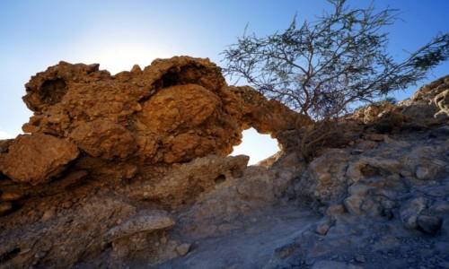 IZRAEL / Morze Martwe / Ein Gedi / Okienko z drzewkiem