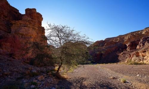 Zdjęcie IZRAEL / Eilat / Czerwony kanion / Słoneczne drzewko